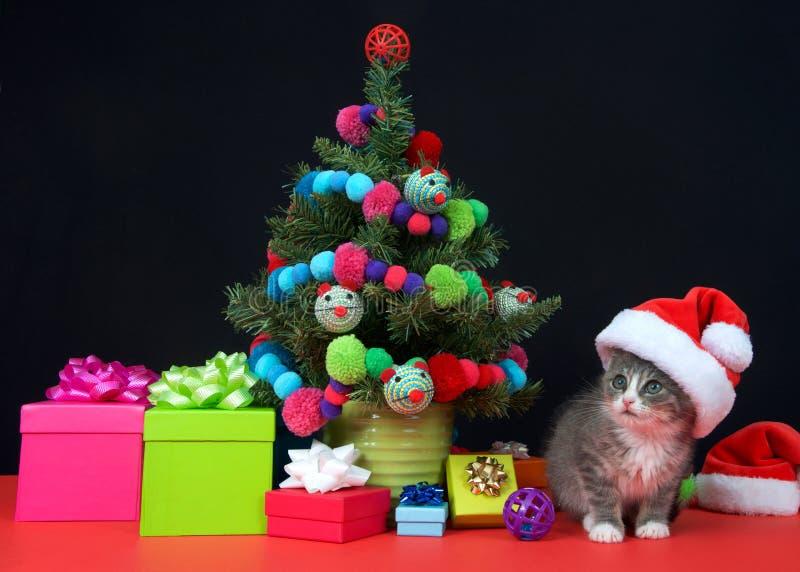 Bożenarodzeniowa tabby figlarka jest ubranym Santa kapelusz miniaturowym drzewem zdjęcie royalty free