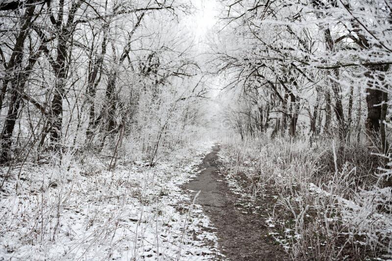 Bożenarodzeniowej tajemniczej zimy śnieżny las z nakryciem rozgałęzia się zdjęcie stock