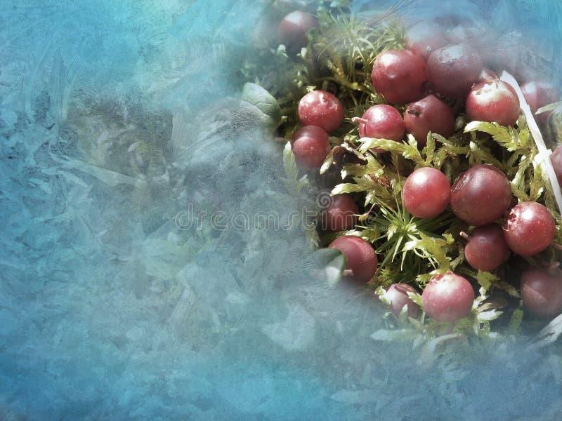 Bożenarodzeniowi cranberries fotografia stock