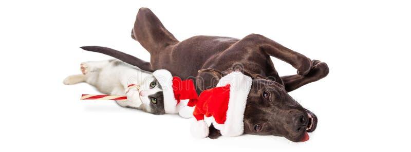 Bożenarodzeniowi pies i kot Kłama Wpólnie sztandar zdjęcie royalty free
