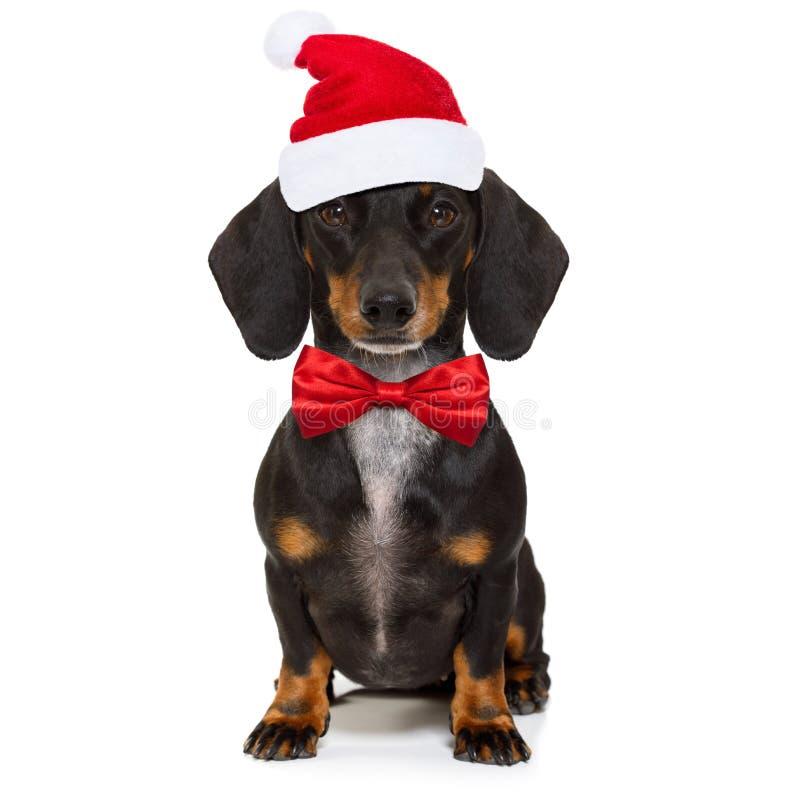 Bożenarodzeniowy Święty Mikołaj pies fotografia royalty free