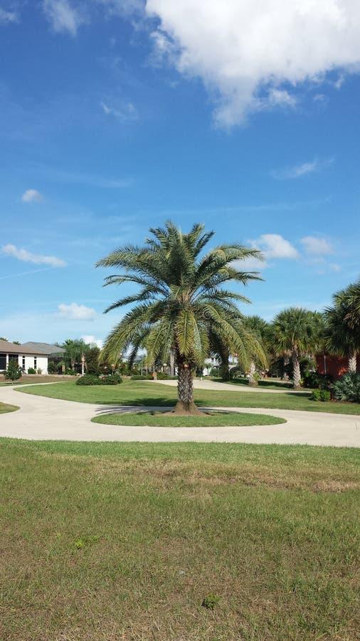Bożenarodzeniowy drzewko palmowe obraz royalty free