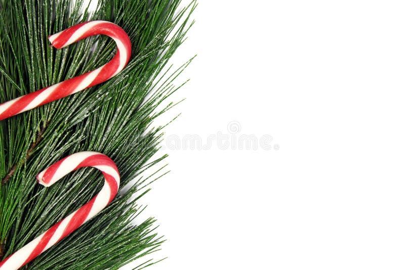 Bożenarodzeniowy jedlinowy drzewo i cukierek trzcina na białym tle zdjęcie royalty free