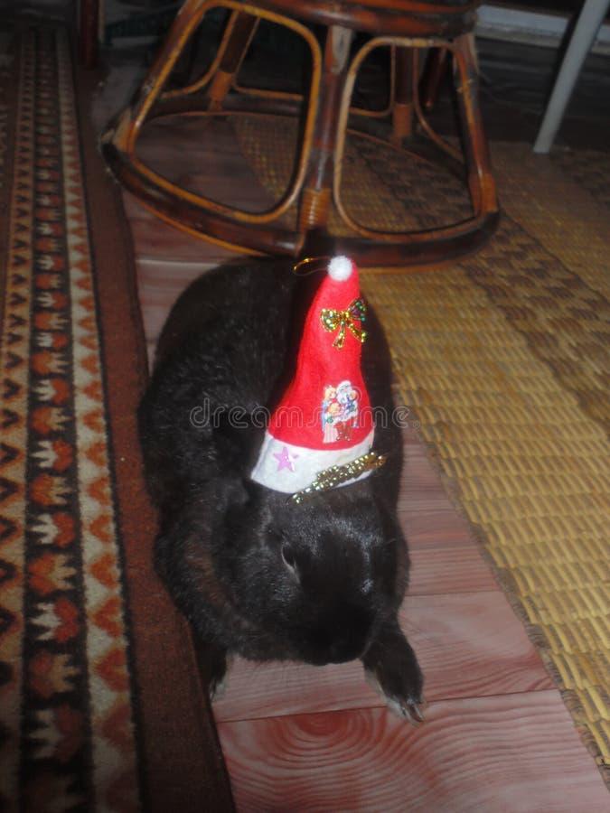 Bożenarodzeniowy królik zdjęcie royalty free
