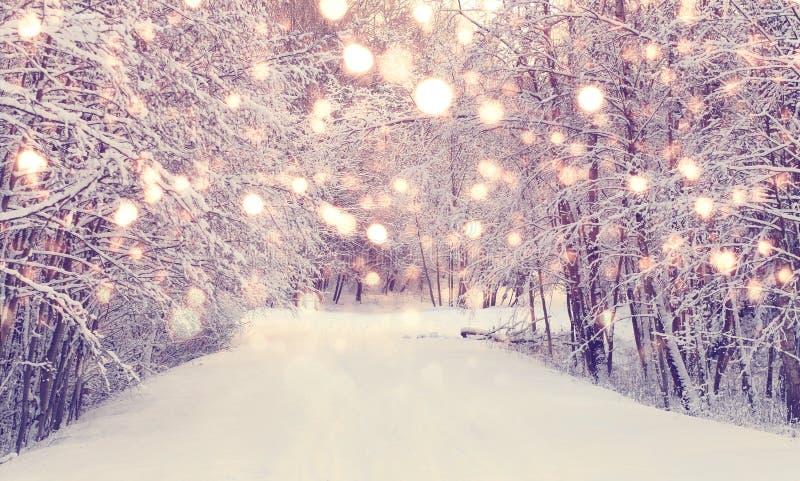 Bożenarodzeniowy opad śniegu w parku fotografia stock