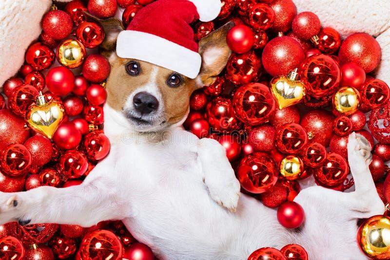 Bożenarodzeniowy Santa Claus pies i xmas piłki jako tło fotografia royalty free
