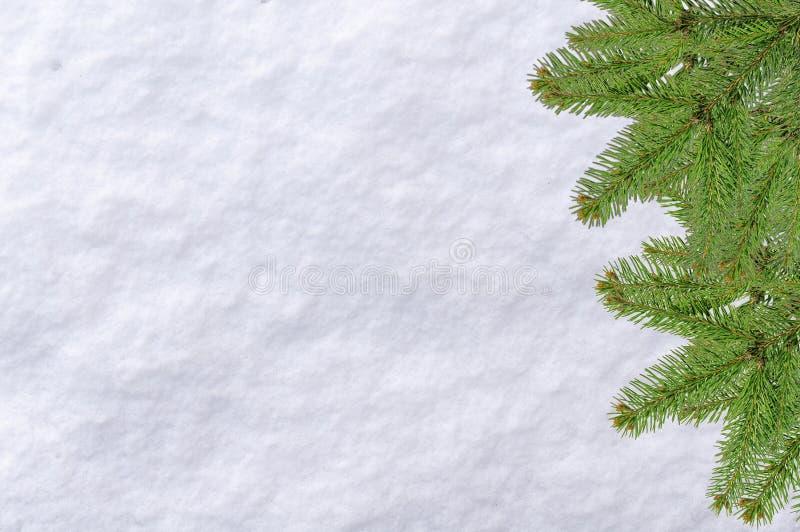 Bożenarodzeniowy sosny i śniegu nawierzchniowy biały tło fotografia stock