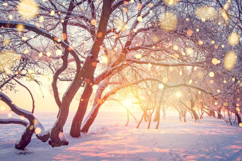 Bożenarodzeniowy Wakacyjny Tło Zimy natury krajobraz w olśniewającym bokeh zdjęcie stock
