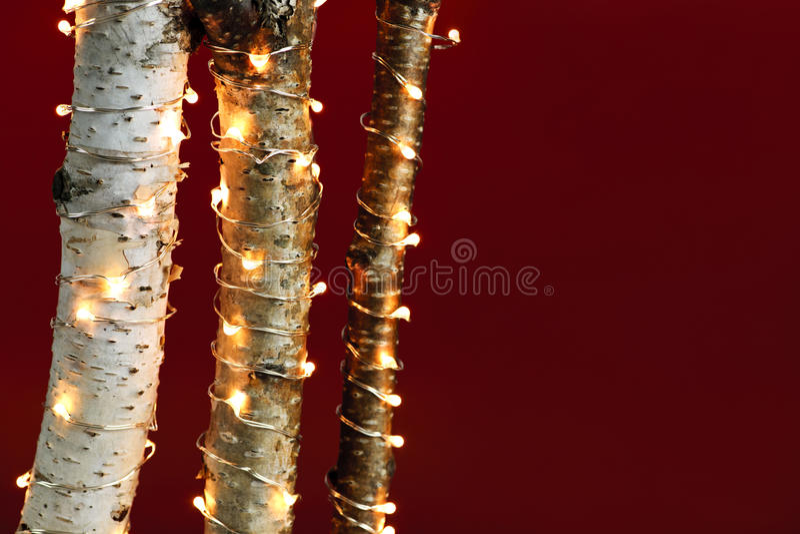 Bożonarodzeniowe światła na brzoz gałąź zdjęcie royalty free