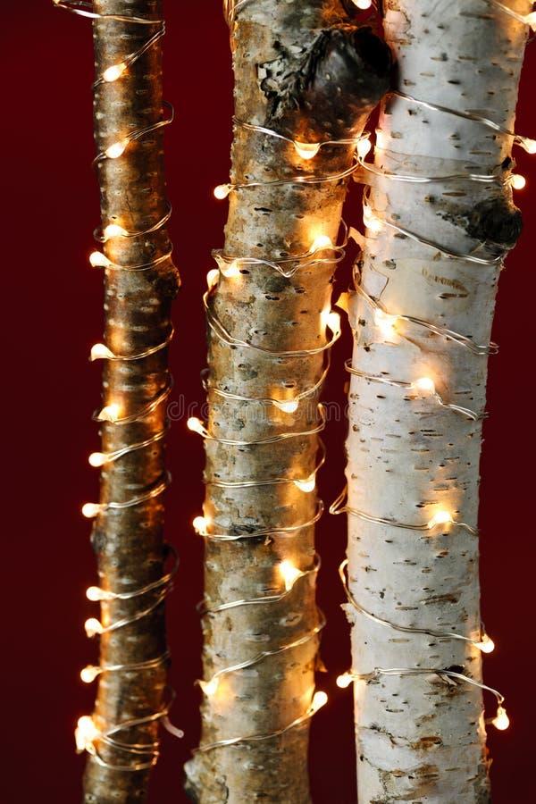 Bożonarodzeniowe światła na brzoz gałąź obraz stock