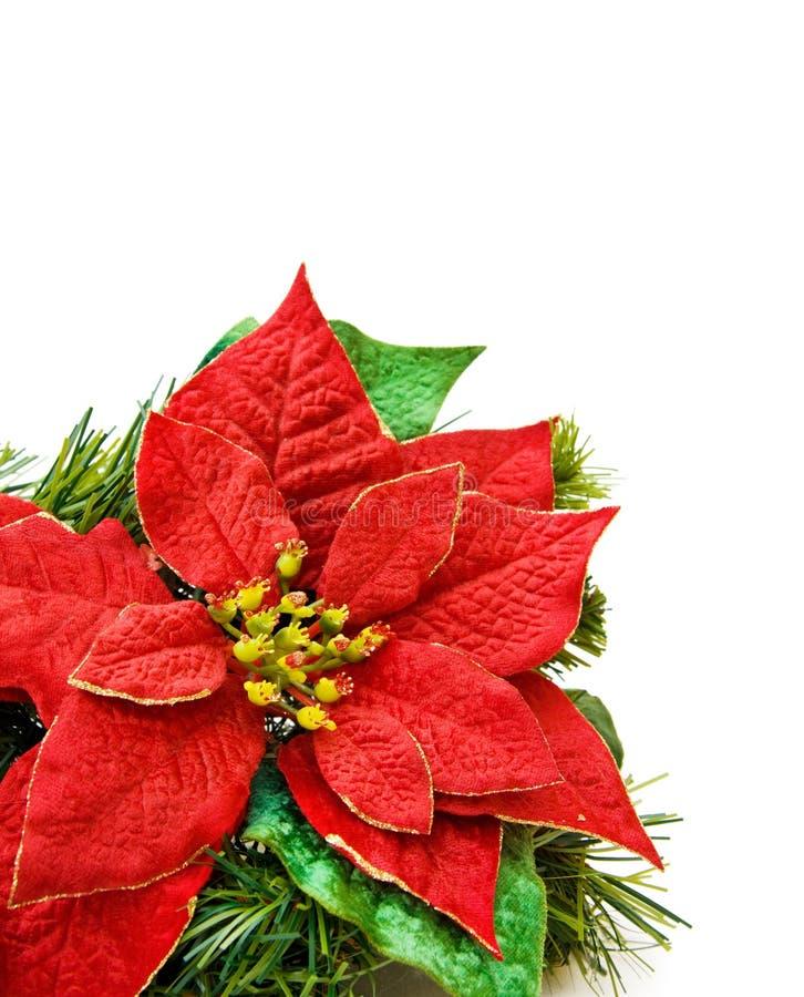 bożych narodzeń dekoraci kwiatu czerwień obrazy royalty free