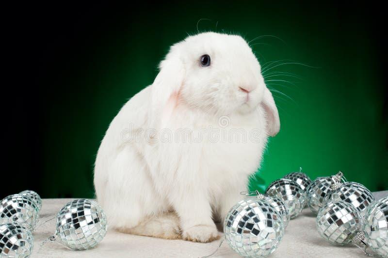 bożych narodzeń dekoracj królika biel obraz stock