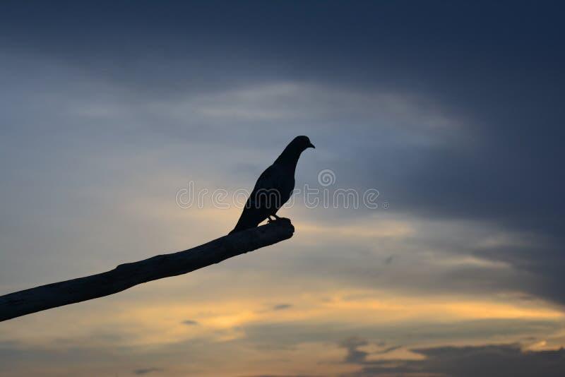 Bo i fred - fågel arkivfoto