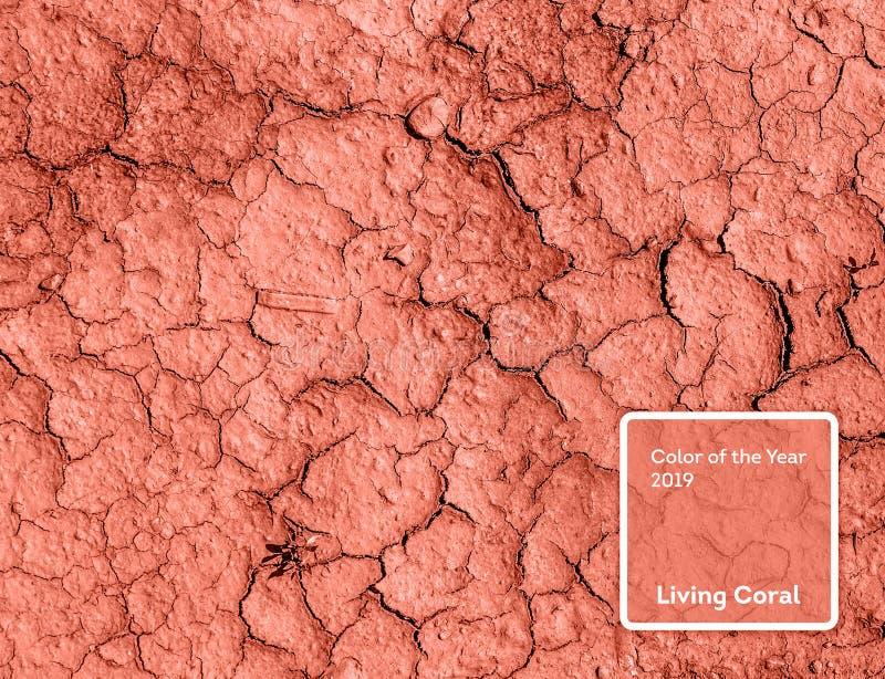 Bo korallfärg av året 2019 Torka förtorkad jord med korall i moderiktig färg royaltyfria bilder