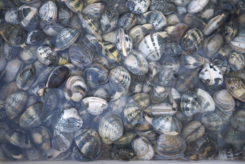Bo musslor i en restaurang arkivfoton