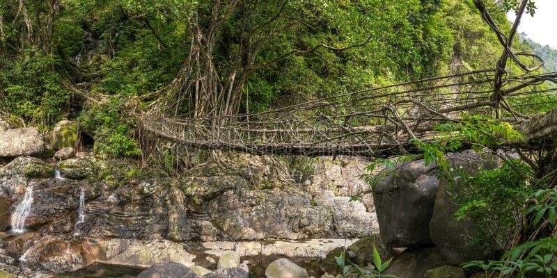 Bo rotar bron nära den Nongriat byn, Cherrapunjee, Meghalaya, Indien royaltyfri bild