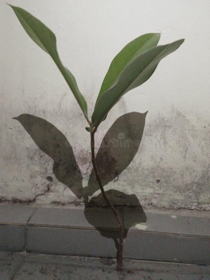 Bo utan mat, hem som den gillar växten levande utan jord royaltyfria foton