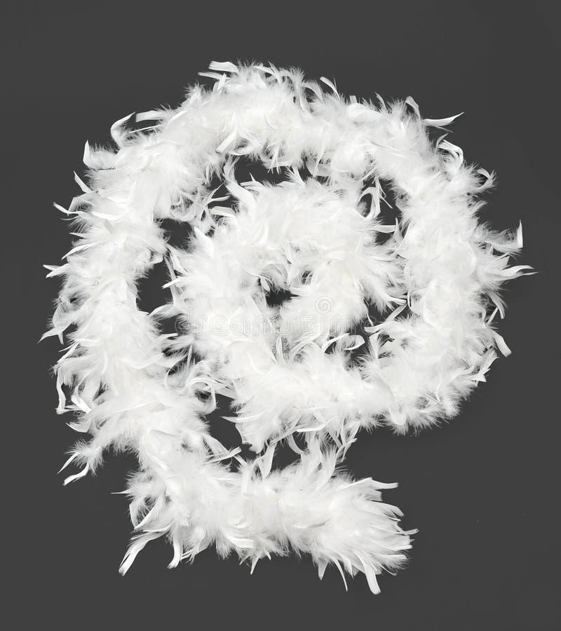 Boa blanc image stock