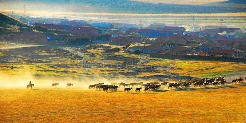 boa manhã do rancho imagens de stock