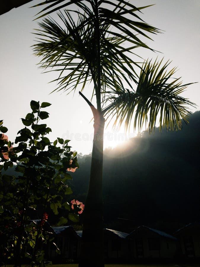 Boa noite, por do sol bonito na floresta foto de stock