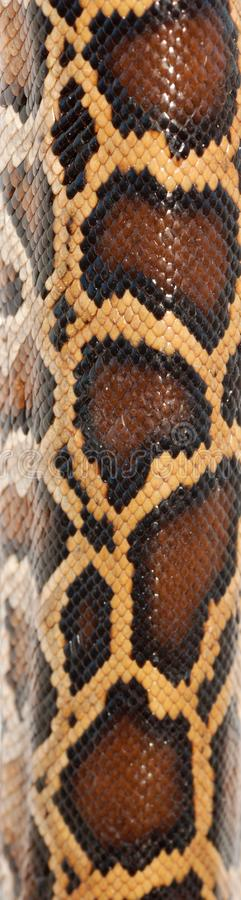Boa snake pattern. Background macro royalty free stock photo