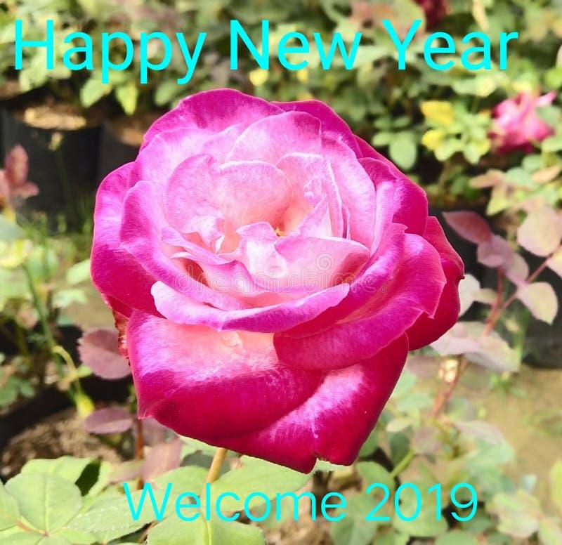 Boa vinda do ano novo, com Rosa imagens de stock