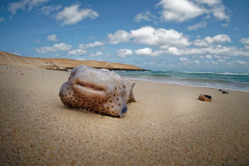 Boa Vista de la isla en Cabo Verde, paisaje - playa fotografía de archivo
