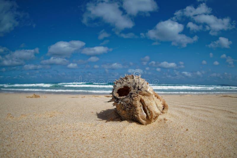 Boa Vista de la isla en Cabo Verde, paisaje - playa imagen de archivo