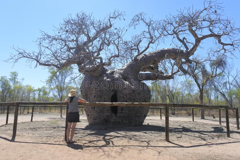 Boab Prison Tree in Derby Kimberley Western Australia royalty free stock images