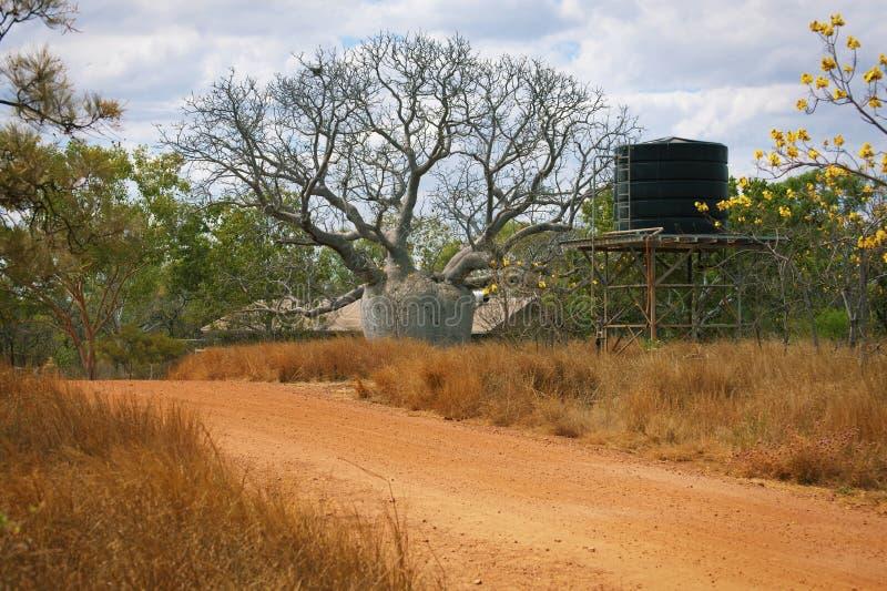 Boab wielki Drzewo zdjęcia royalty free