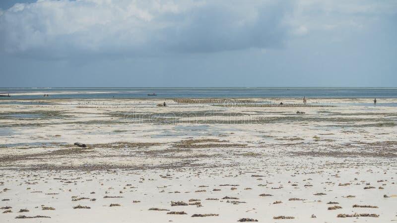 Boach i Zanzibar arkivfoton