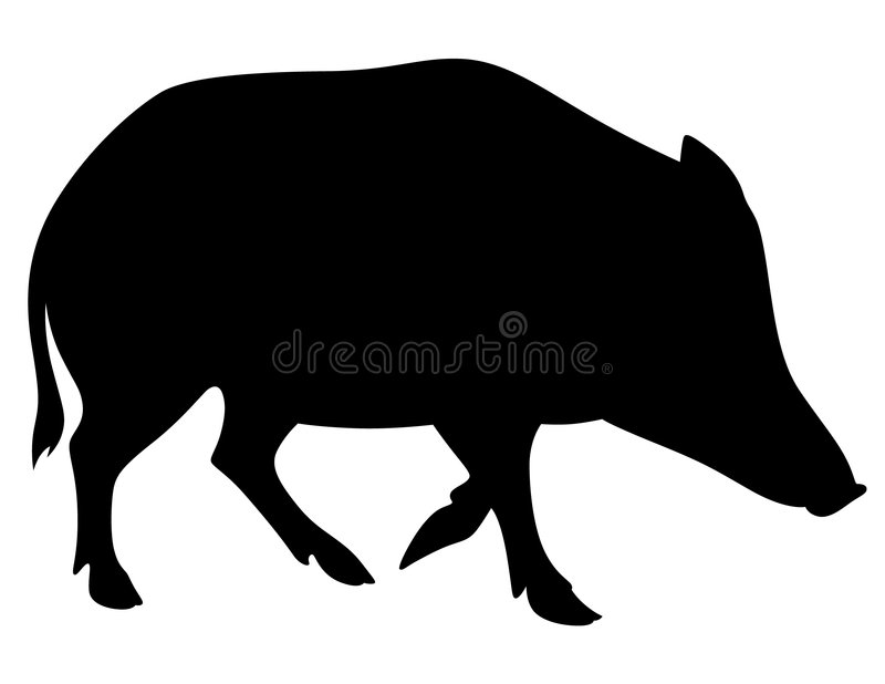 Boar. Black and white image of the boar (wild pig stock illustration
