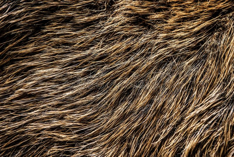 Boar Fur Texture royalty free stock photo
