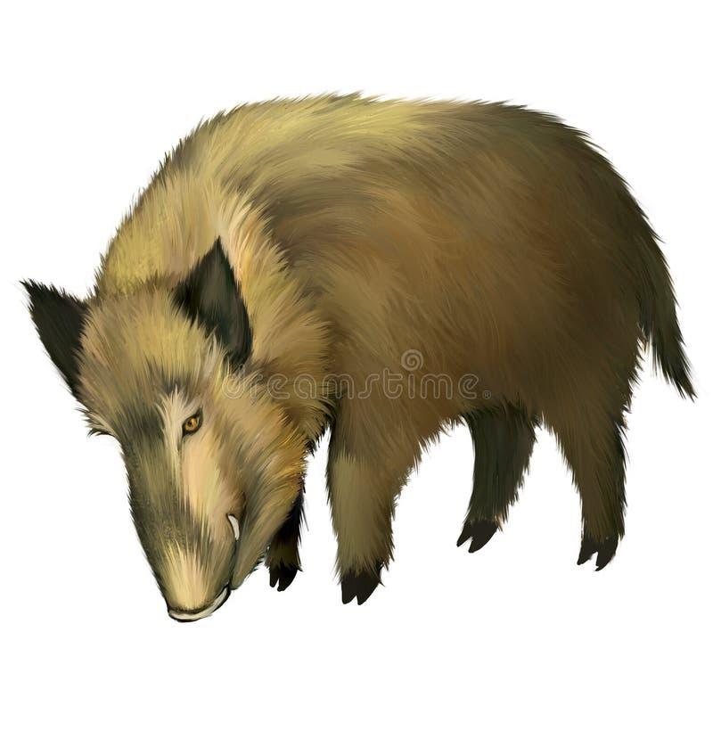 Boar. Isolated realistic illustration on white background royalty free illustration