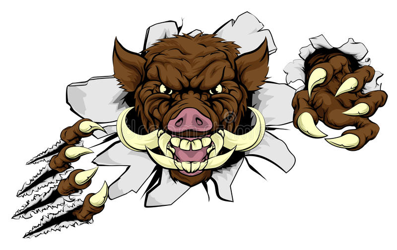 Boar Mascot. A wild boar or razorback cartoon sports mascot ripping through a wall with his claws stock illustration