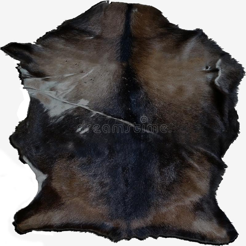 Boar pelt with alpha. This was a pelt of a boar, I created this texture from 3 4k images, it has alpha fur royalty free stock image