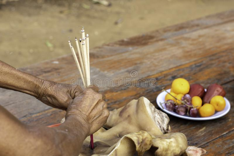 Boar`s head and boiled chicken that Thai people bring to worship holy things.  stock photos