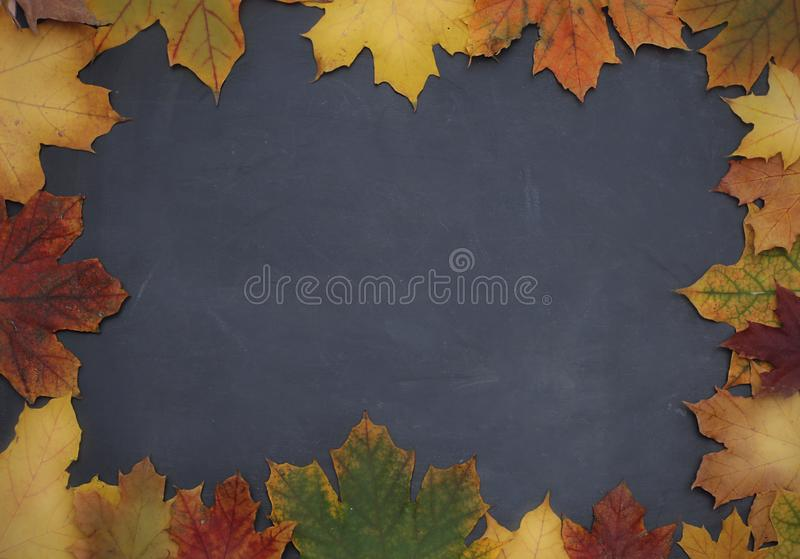 Frame of autumn leaves on chalkboard background stock photos