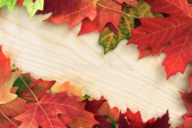Download Board with leafs stock image. Image of color, fall, message - 21662565