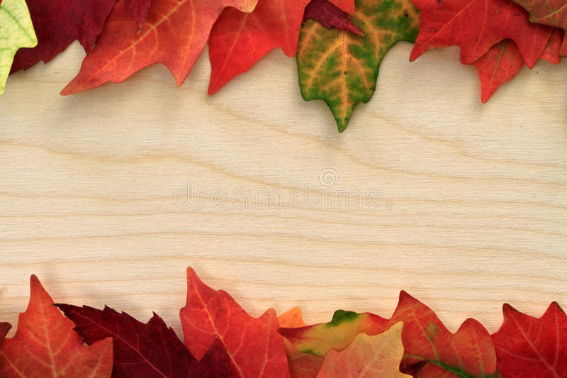 Board With Leafs Stock Photography