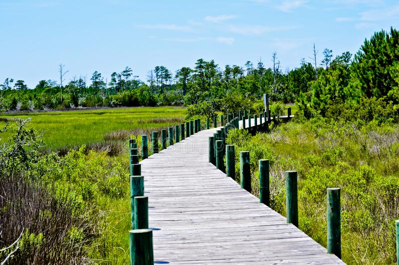 Boarded pathways in the Carolinas. A path surrounded by marshlands and forests. Blue skies. Grasses bright green royalty free stock photo