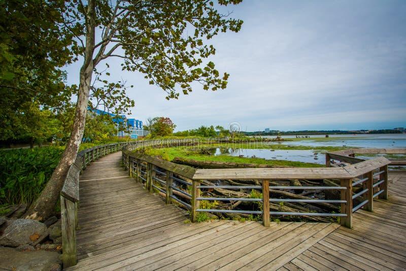 Boardwalk ślad w bagna przy Rivergate miasta parkiem w Alexand, obrazy royalty free