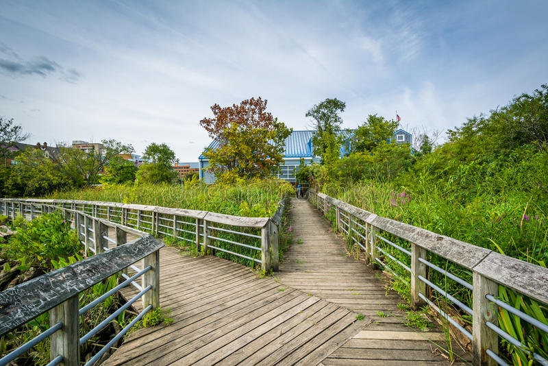 Boardwalk ślad w bagna przy Rivergate miasta parkiem w Alexand, zdjęcie stock