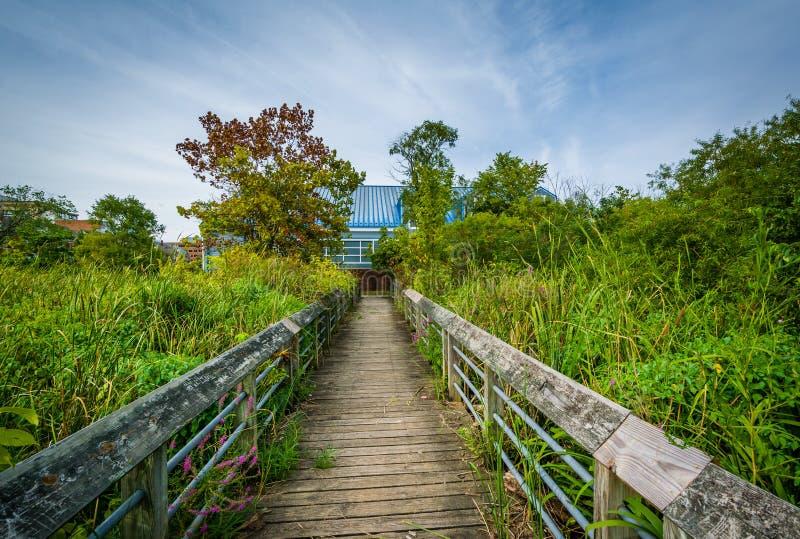 Boardwalk ślad w bagna przy Rivergate miasta parkiem w Alexand, zdjęcia royalty free
