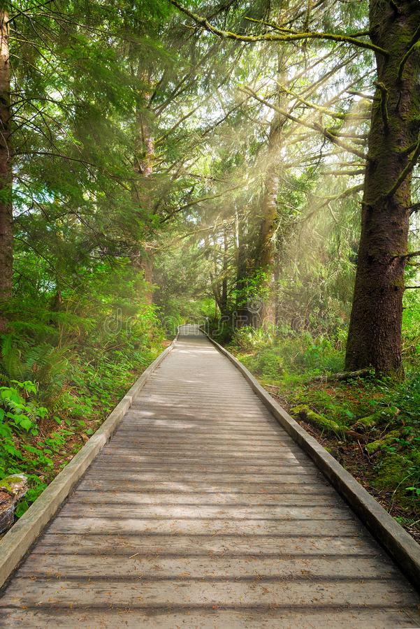 Boardwalk along Hiking Trail at Fort Clatsop. Boardwalk along hiking trail by Lewis and Clark River at Fort Clatsop stock photo