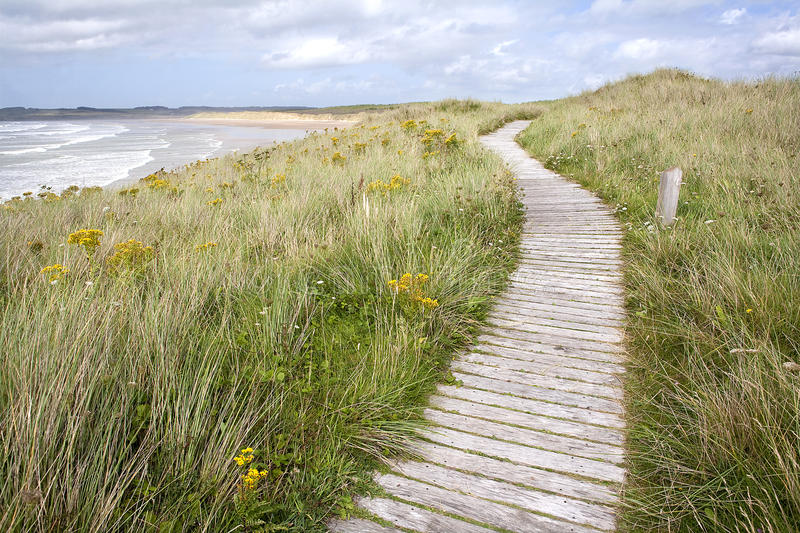 Boardwalk coastal path. Boardwalk coastal path through sand dunes, Anglesey, Wales stock photography
