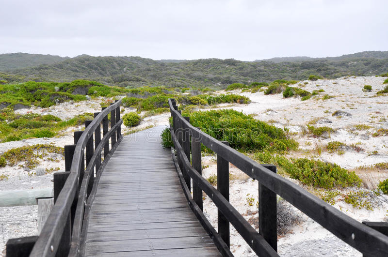 Boardwalk in the Dunes royalty free stock photos
