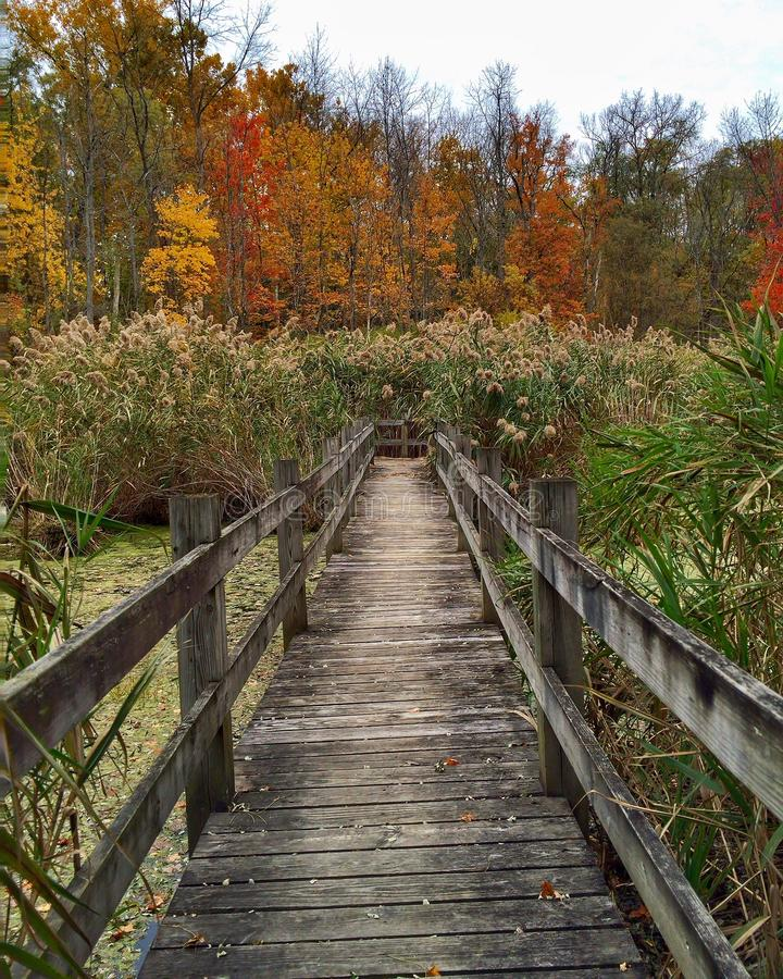 A Boardwalk Entrance to the Swamp royalty free stock photo