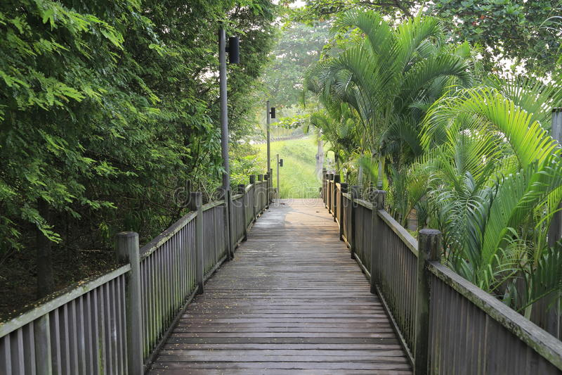 Download Boardwalk in forest stock photo. Image of danger, explore - 28443526