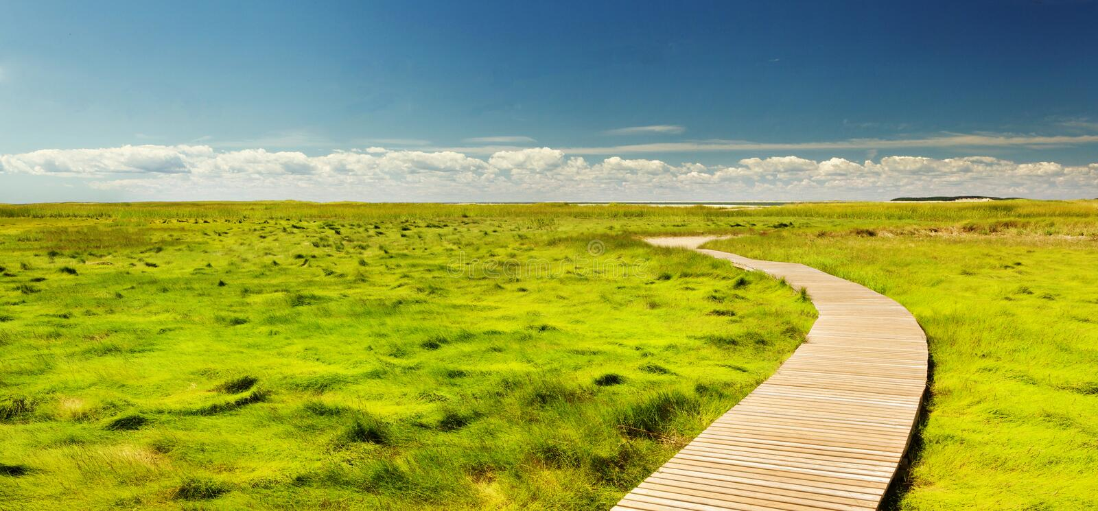 Boardwalk Through Green Field Free Public Domain Cc0 Image